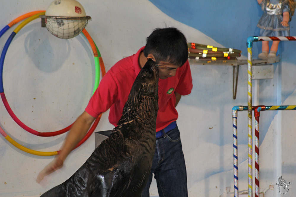 представление морских котиков