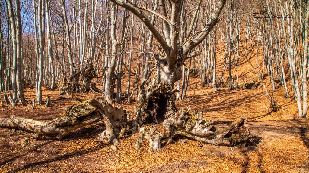 Лес у подножья Южного Демерджи