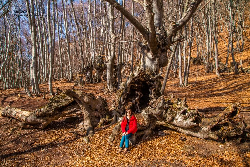 Огромные деревья в лесу