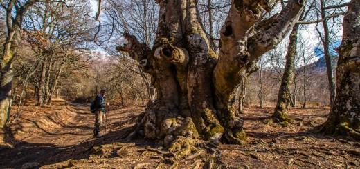Лес у подножья Демерджи