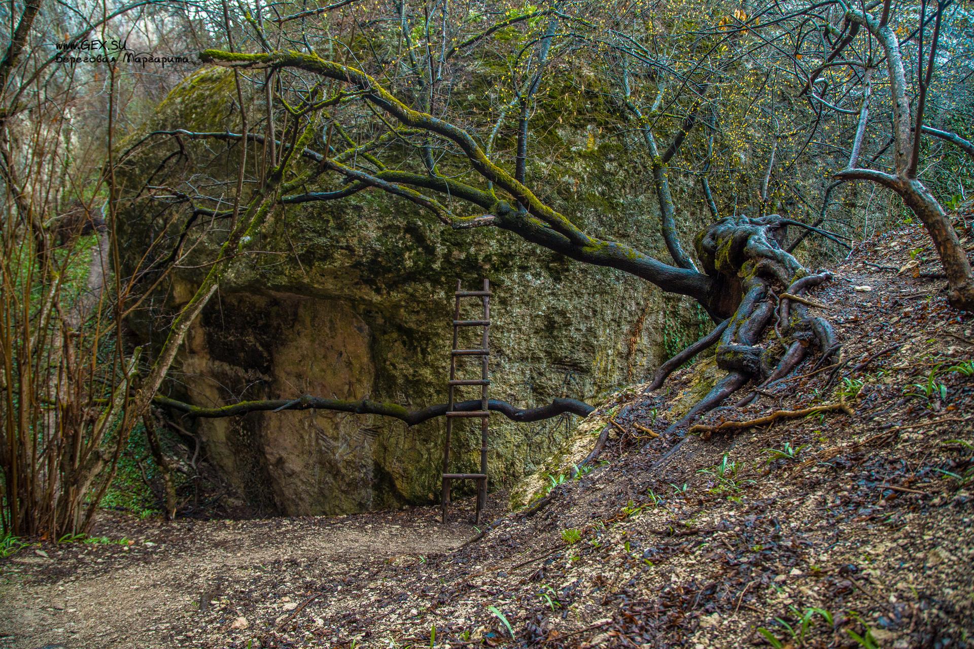 дерево у горы Крокодил