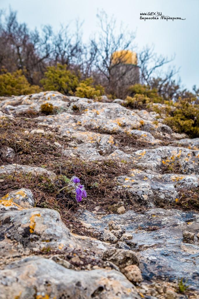 Шулдан весной