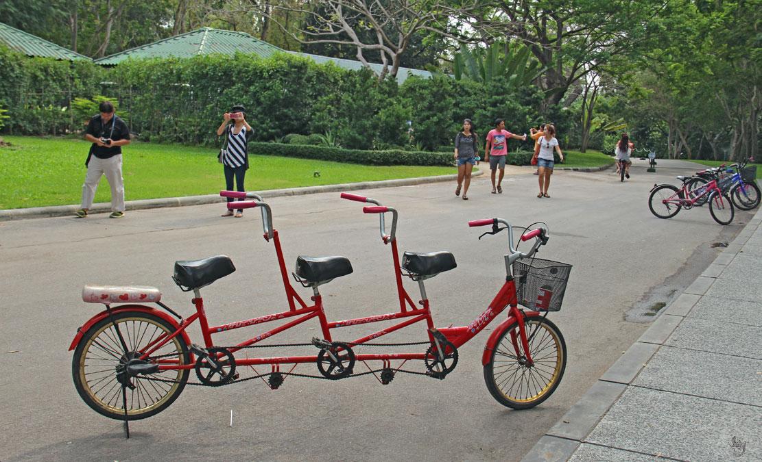 прокат велосипеда в тиковом дворце