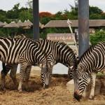 Сафари парк Таиланд