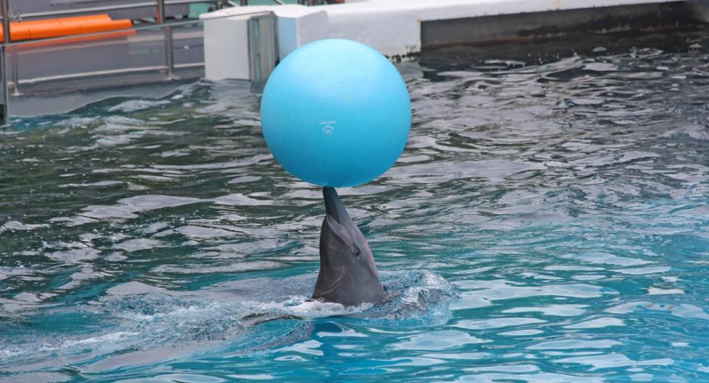 дельфины в сафари парке Бангкока