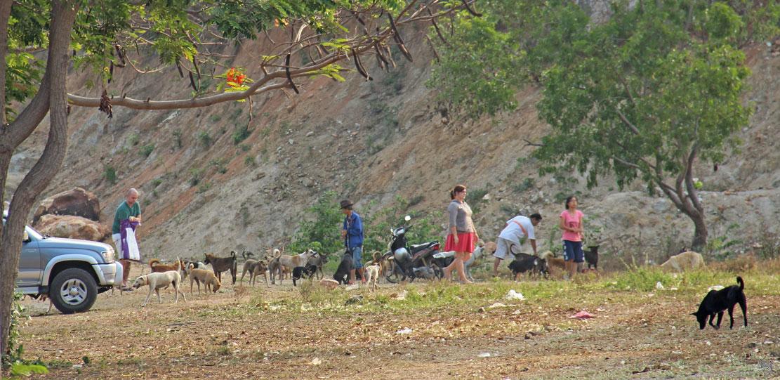 собачий приют хуа хин