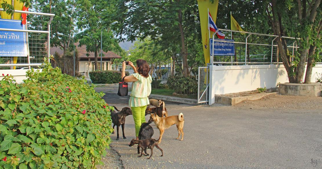 собачий приют в хуа хине