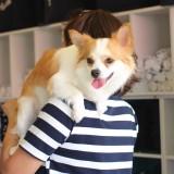 собаки хуа хин