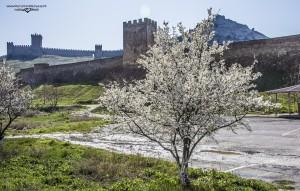 крепость весной
