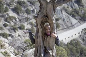 дерево в крыму