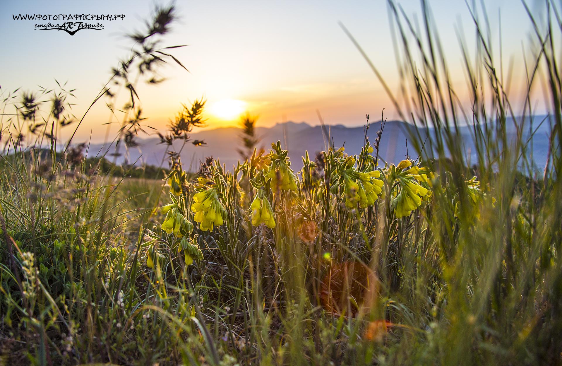 фото крымских трав