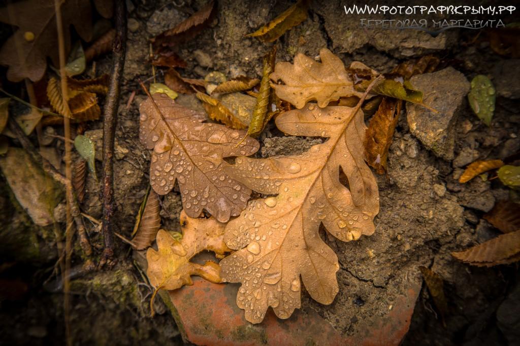 дубовые листья