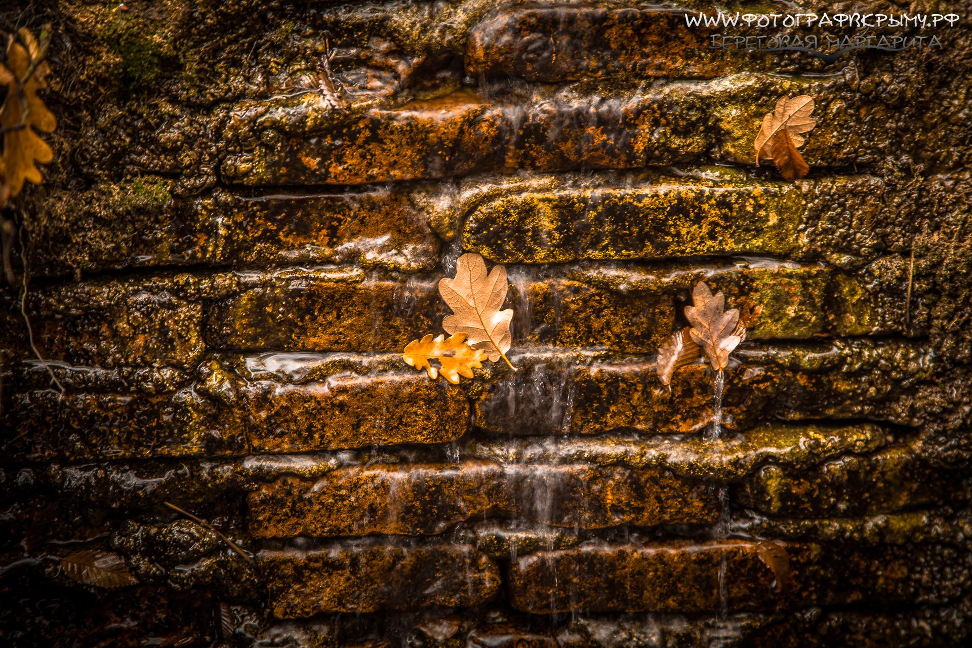 листья в роднике