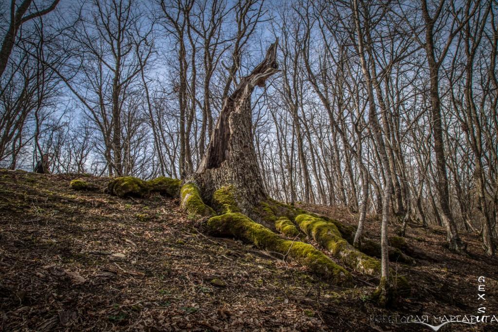 весенний крымский лес