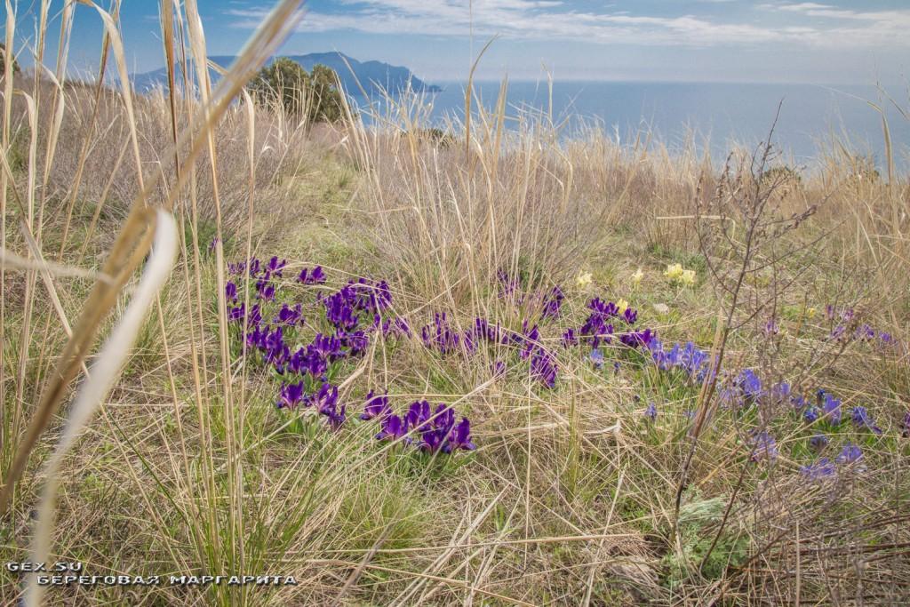 цветы на горе Алчак