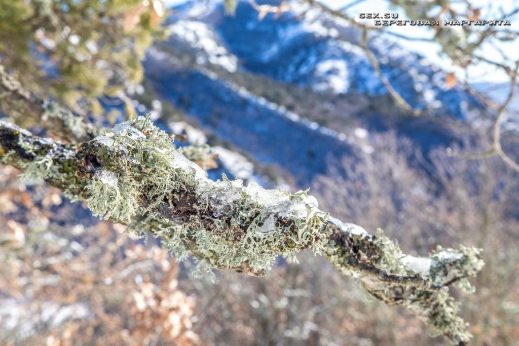 зимний крымский лес