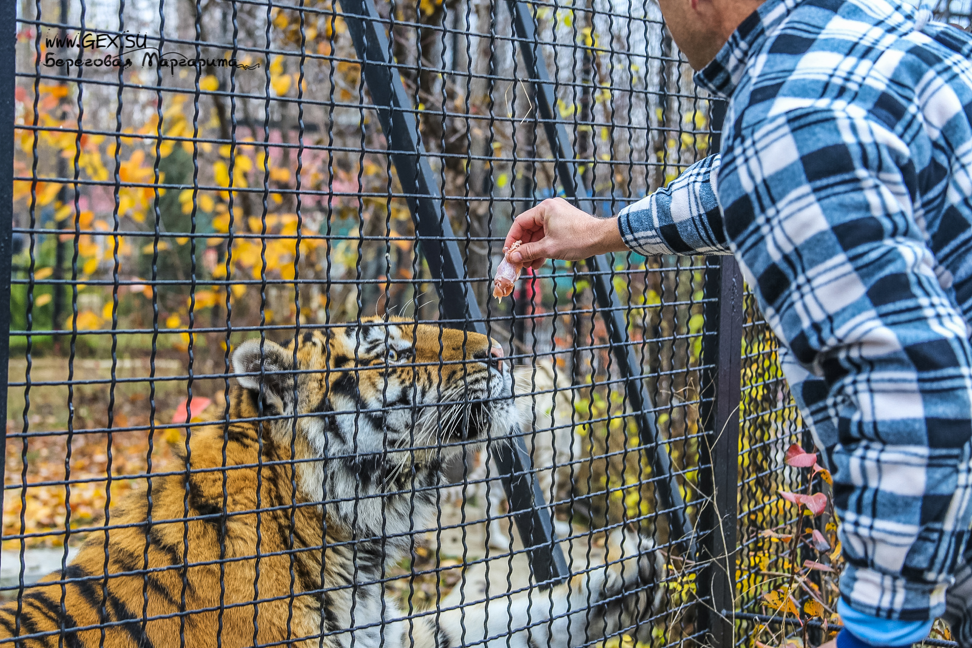 Парк львов в Крыму