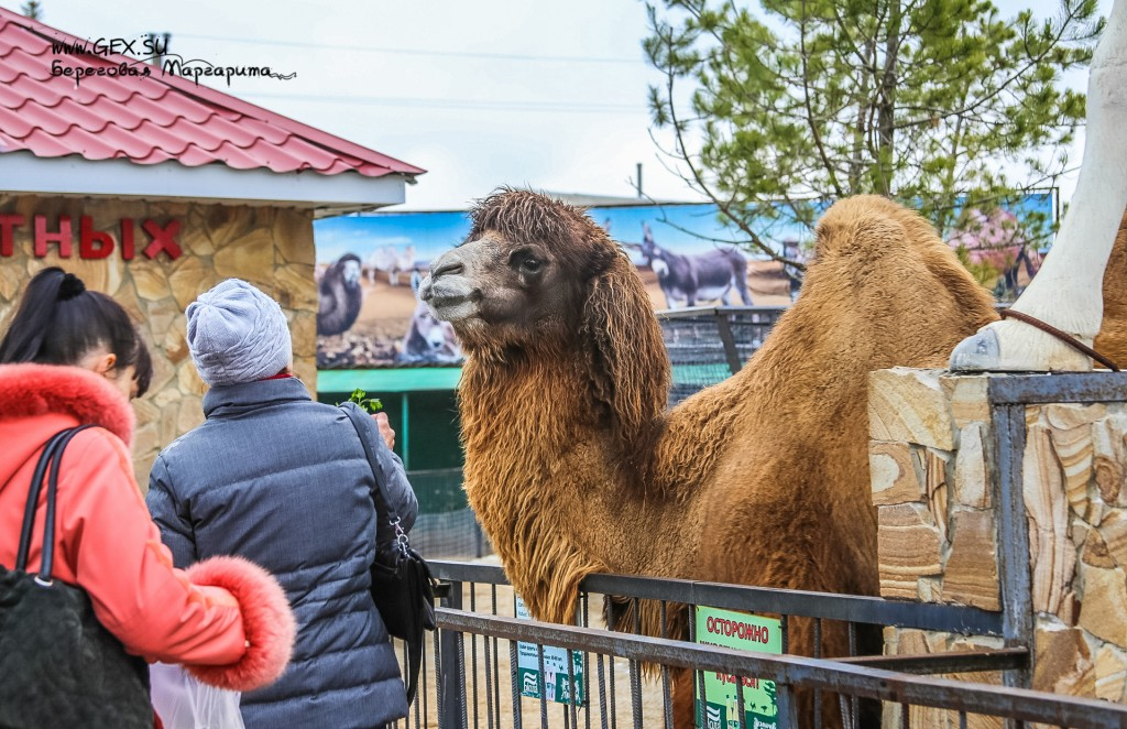 Зоопарк в Тайгане