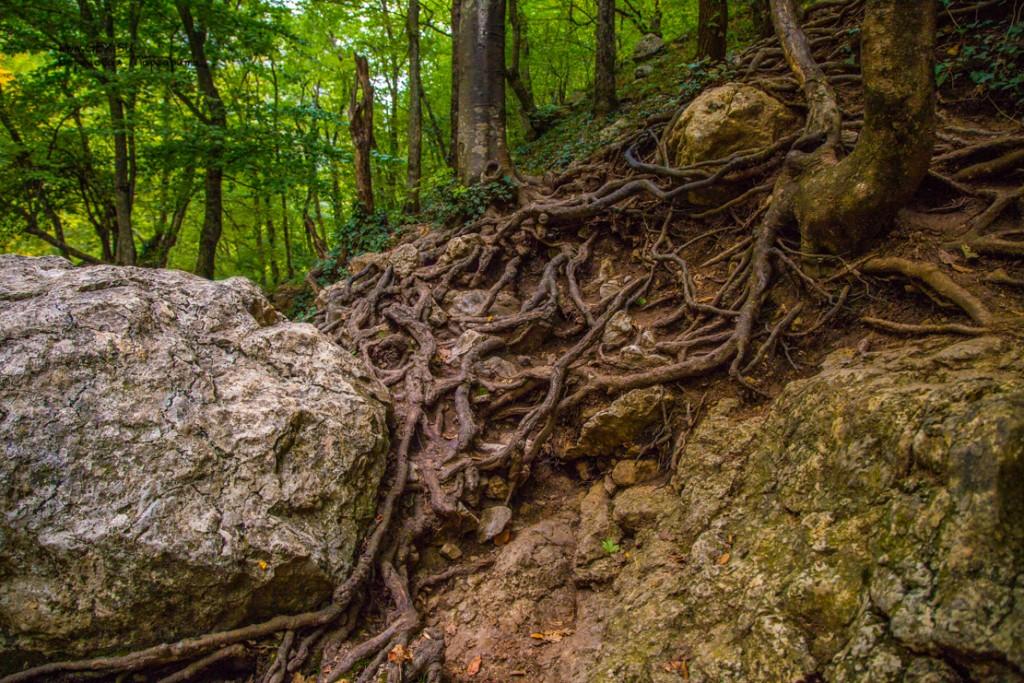 корни в большом каньоне