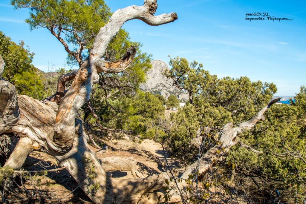 Сухие деревья в Новом свете