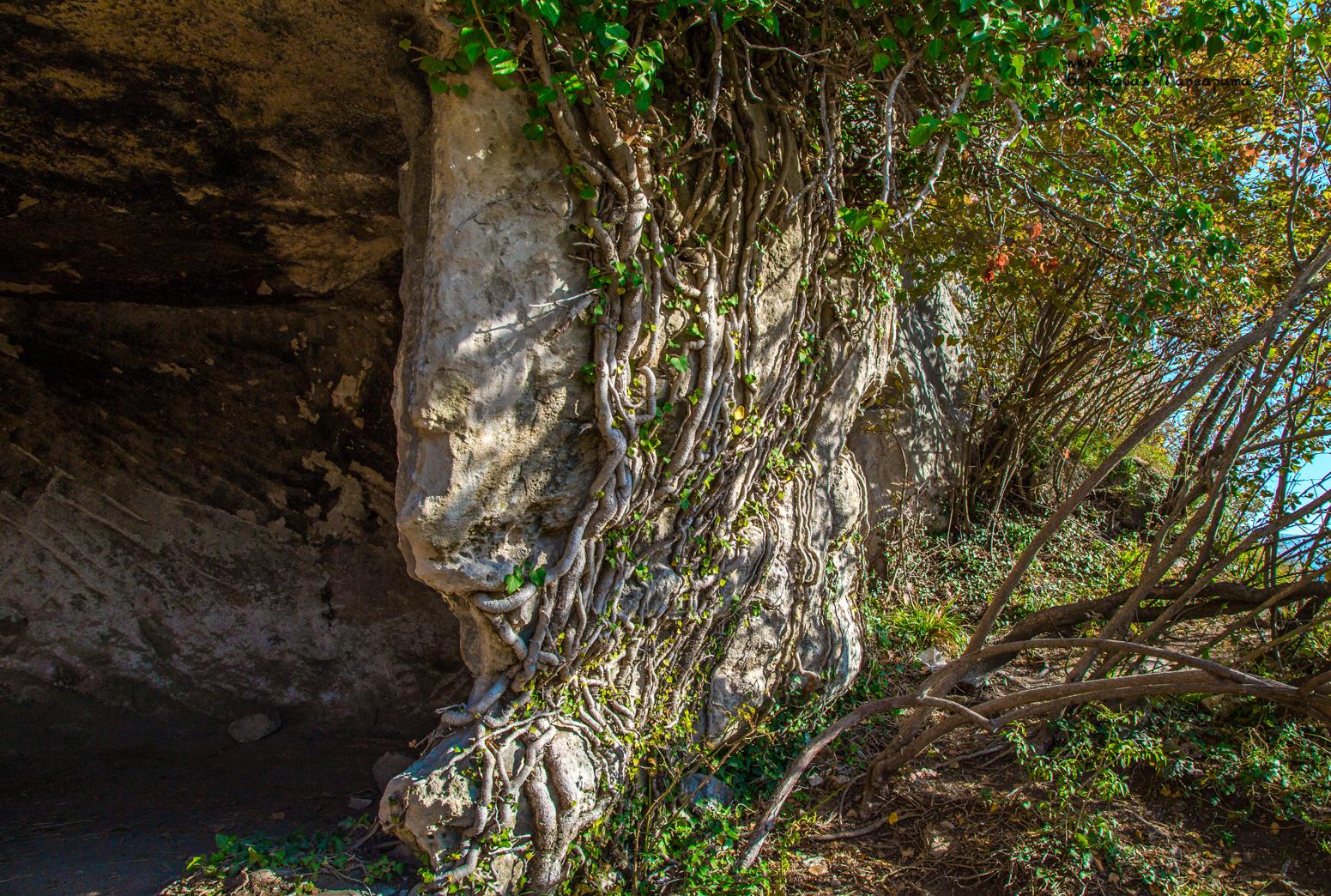 плющ в пещерном городе
